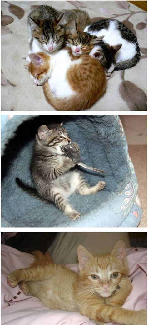 comel koleksi gambar kucing  seriusly comel