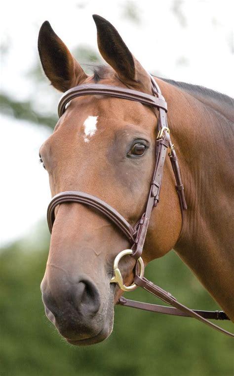 die besten  pferde trense ideen auf pinterest reiter