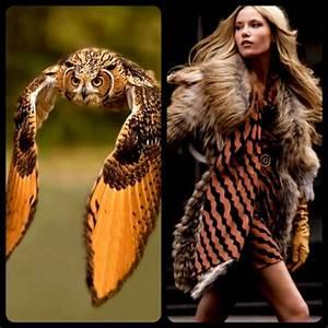 Fashion Bird Erfahrungen : 17 best images about fashion inspired by animals on pinterest ux ui designer animals and nature ~ Markanthonyermac.com Haus und Dekorationen