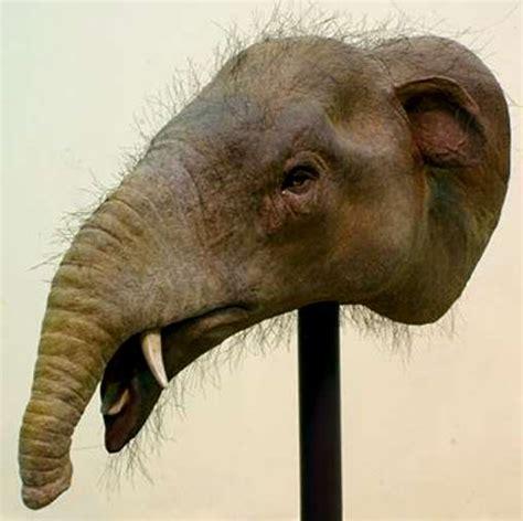 mastodons  related early elephants
