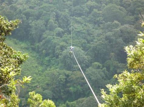 Hummingbird in Santa Elena National Park   Picture of Santa Elena, Monteverde   TripAdvisor
