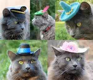 cat hats hats for cats the green