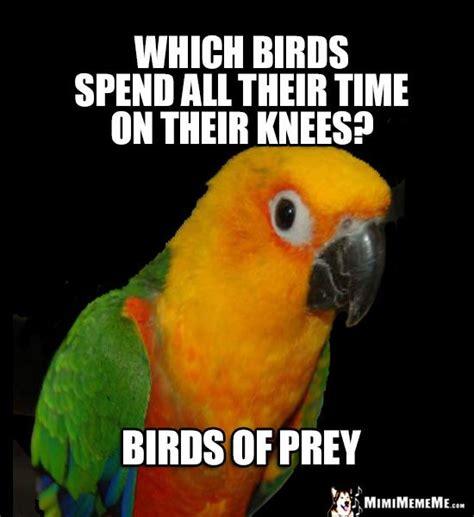 Parrot Meme - 287 best images about funny birds bird photos on pinterest funny birds parrot and photos