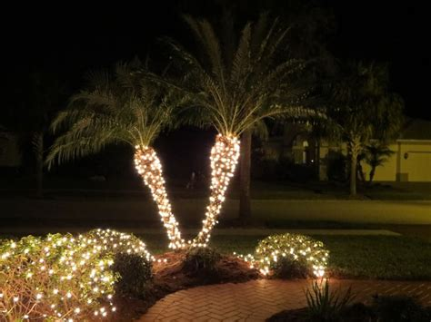 houses with christmas tree lites in palm springs pam trees with lights lights kimimela rising raindrops on roses