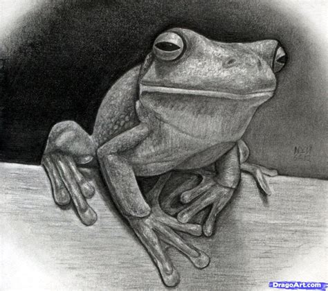 Drawing A Realistic Frog White Lipped Tree Frog Added By