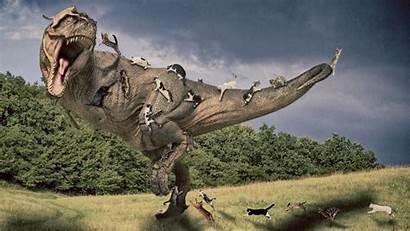 Rex Tyrannosaurus Wallpapers Manipulation Jurassic Cat Cats