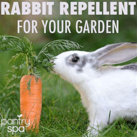 deer rabbit repellent spray diy garden remedies