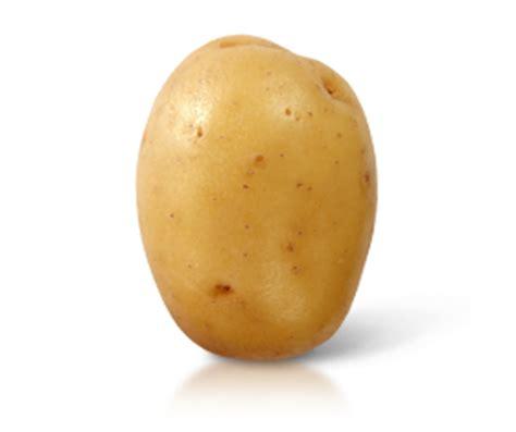 cuisiner avec enfants variétés de pommes de terre de consommation courante gt c n