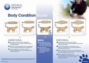 Cat Food Feeding Chart Calorie Calculator For Cats