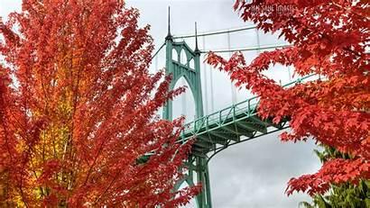 Trees Oregon Bridge Portland Autumn Bright Park