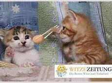 Katzenbilder zum Lachen Witzezeitung