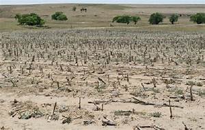 Relief for drought-hit areas in Western Cape | Voice of ...