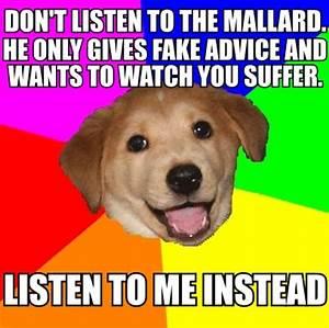[Image - 450691] | Actual Advice Mallard | Know Your Meme