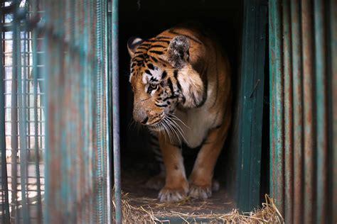 zoo animals worst gaza rescued atlantic