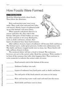 how fossils were formed worksheet resources 2 4