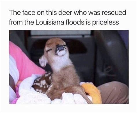 Wholesome Memes Will Warm Your Cold Little Heart
