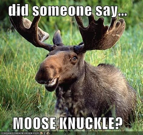 Moose Knuckle Meme 17 Best Images About Moose Knuckle Quotes On
