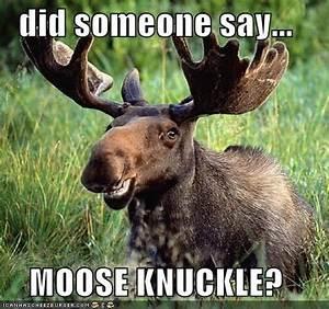 17 Best images ... Elk Animal Quotes
