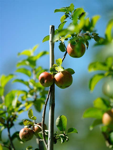 Pflanzzeit Für Obststräucher  Tipps Und Tricks Von Den Profis