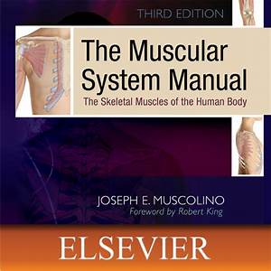 Amazon Com  The Muscular System Manual  The Skeletal