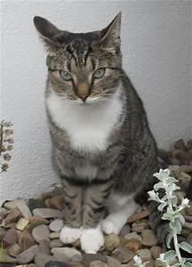 Weißer Wurm Katze : vermisst ~ Markanthonyermac.com Haus und Dekorationen