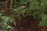 Tiere Im Garten Begraben : igelhaus bauen wir sind im garten ~ Lizthompson.info Haus und Dekorationen