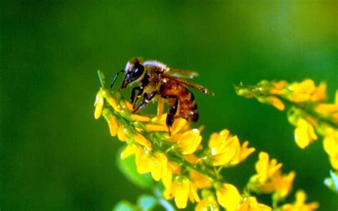 bee wallpaper wallpapersafari
