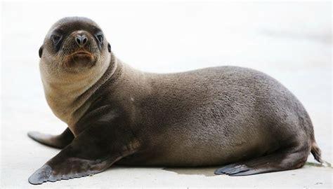 sea lion baby  dublin zoo zooborns