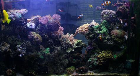 hesite a me lancer en eau de mer page 2 eau de mer forum aquariophilie aquarium aquaryus