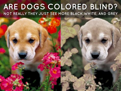 are bees color blind color blind by gabbi sonntag