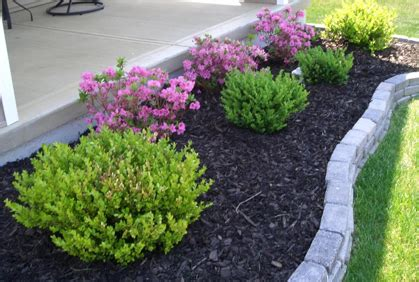 bush ideas best types of shrubs for landscaping designs photos