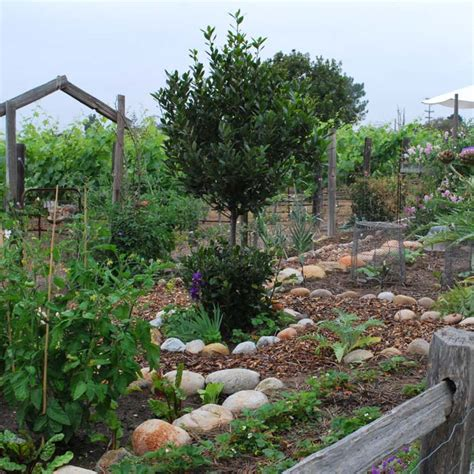 southern california gardening favorite plant combos for