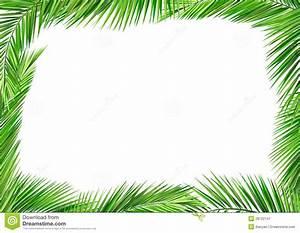 Coconut Leaf Clipart - ClipartXtras