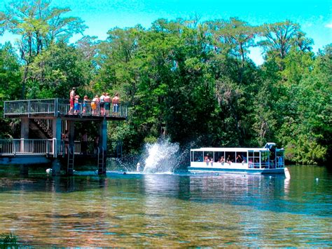 Top Everglades Boat Tours by Top 10 Florida Boat Tours Cruises