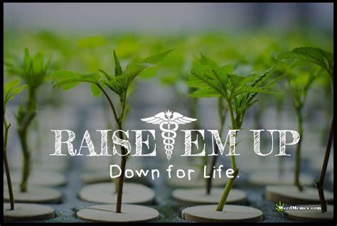 raiseem    life grow cannabis weed memes