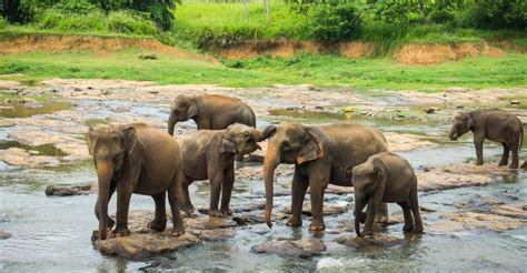 addressing concerns  pinnawala elephant orphanage