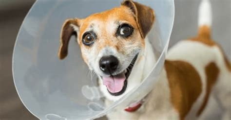 Protect your best friend with the best coverage. Out-of-hours and emergency vet bills: why do they cost so much and will pet insurance cover them ...