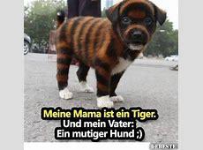 Meine Mama ist ein Tiger Und mein Vater ein mutiger Hund