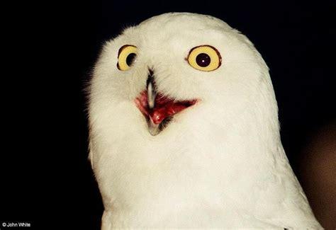 White Owl Meme - image 196194 o rly know your meme