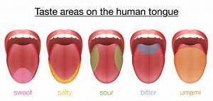 Tongue Function: Keeping Tastes Straight - Trusted Health ...