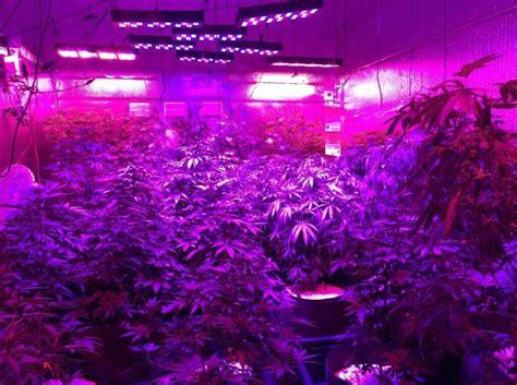 cheap grow lights cheap 1000 watt led grow lights for us indoor plant grow