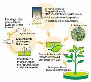 11 Pflanzen Methode : gentechnik ~ Lizthompson.info Haus und Dekorationen