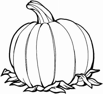 Pumpkin Outline Printable Clipart Clipartion