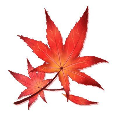 maple leaves japan japanese maple leaf by shivali lorekeeper on deviantart