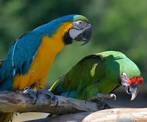 Our Animals | Animal Adventure Park