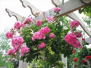 Jardiniere Fleurie Plein Soleil : mon jardin fleuri mes pot es fleuries ~ Melissatoandfro.com Idées de Décoration