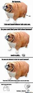 fat dog meme - 28 images - i m a fat dog what breed is it ...