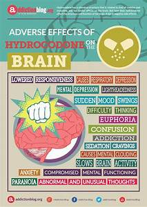 Adverse Effects Of Hydrocodone On The Brain  Infographic