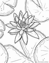 Lily Coloring Water Monet Flower Pages Drawing Printable Adult Claude Painting Lilies Stargazer Sheets Flowers Tiger Getdrawings Marvelous Waterlily Ryanne sketch template