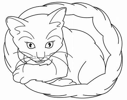 Coloring Cat Pages Cats Kitten Animal Realistic